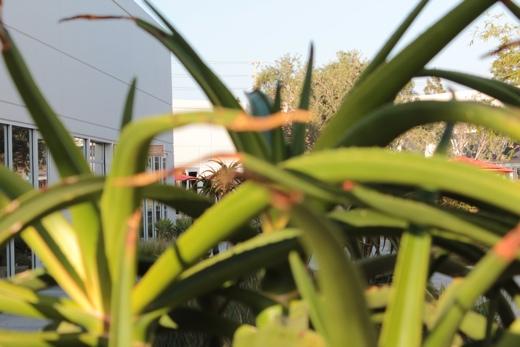 Plants far